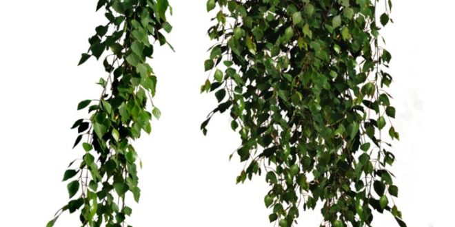 Cutout Plant Hanging Ivy Dwg Drawing Download