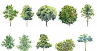 Handpainted PSD Tree Blocks 2 - CAD Design | Free CAD blocks, drawings, details