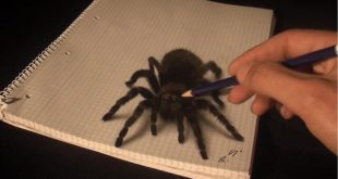 This is the work of Stefan Pabst. | The 3D drawings of this man are so incredible ...