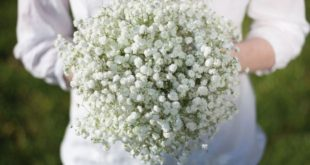 Bouquet of paniculata