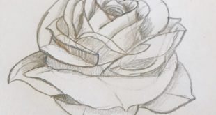 I learn how to draw roses! This is my first one.