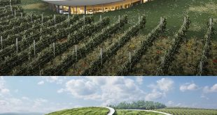 The Sauska winery was designed by BORD Architectural Studio (visualized by __